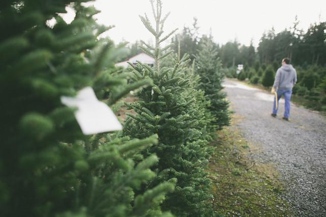 Christmas Tree Farm Pierce County Eatonville