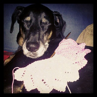 Lola and a #Christmas #knit in progress #dogs #dobermanmix #knitstagram #knitting #love