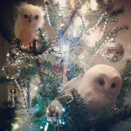 Christmas owls by scosborne