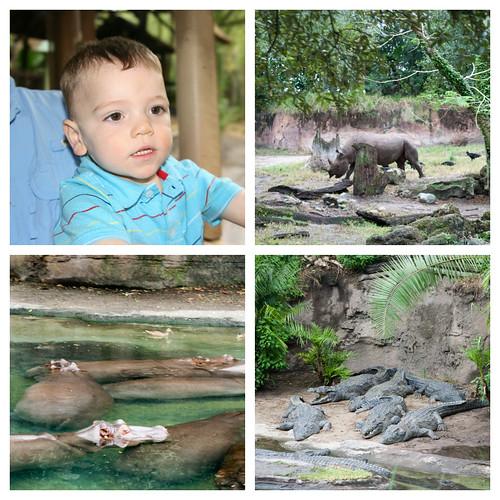 Safari1 Collage