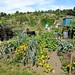 Stuart Road Allotments