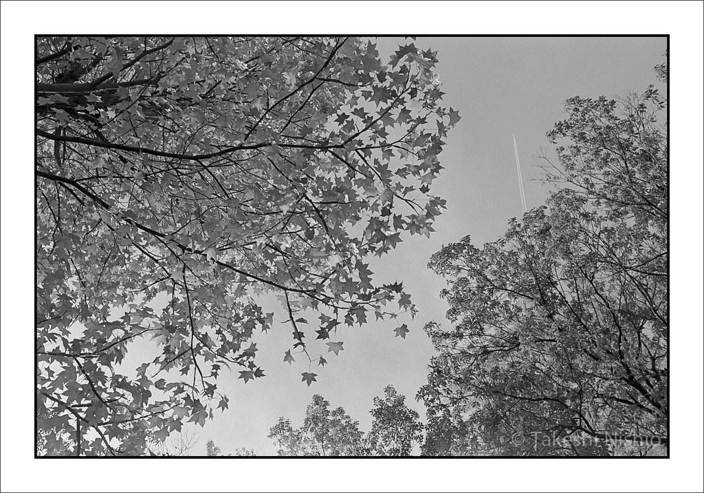 見上げた空に飛行機雲 / Looked up, Contrail on sky