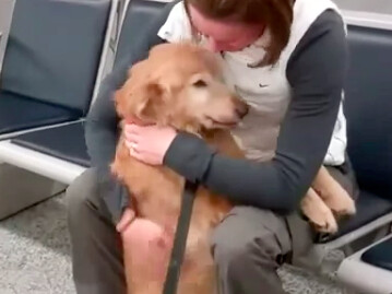 Dog Cries After Being Reunited With Its Owner