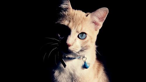 [フリー画像素材] 動物 1, 猫・ネコ ID:201211171000