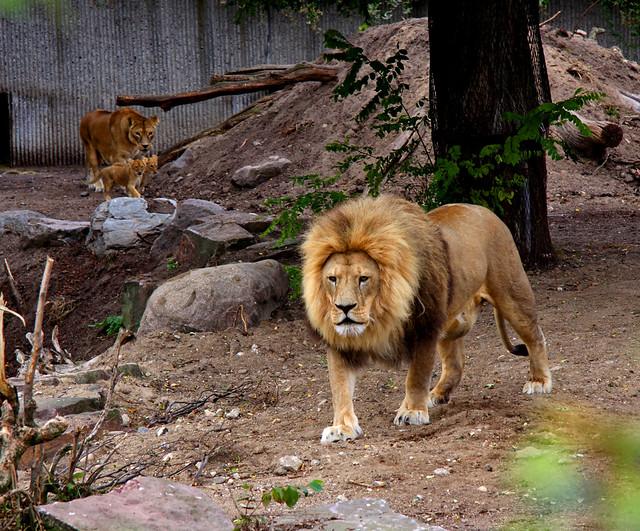 r rør København zoo rabat