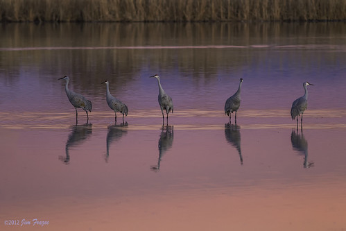 Wading, Waiting, and Watching - Bosque del Apache by SARhounds