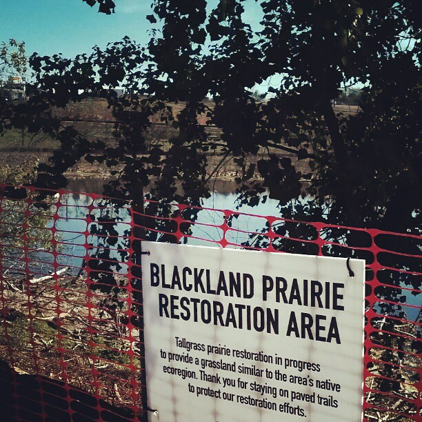 Prairie Restoration at Circuit of the Americas