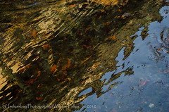 Water (Abstract)