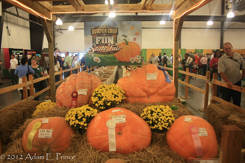 Plenty of Pumpkins!