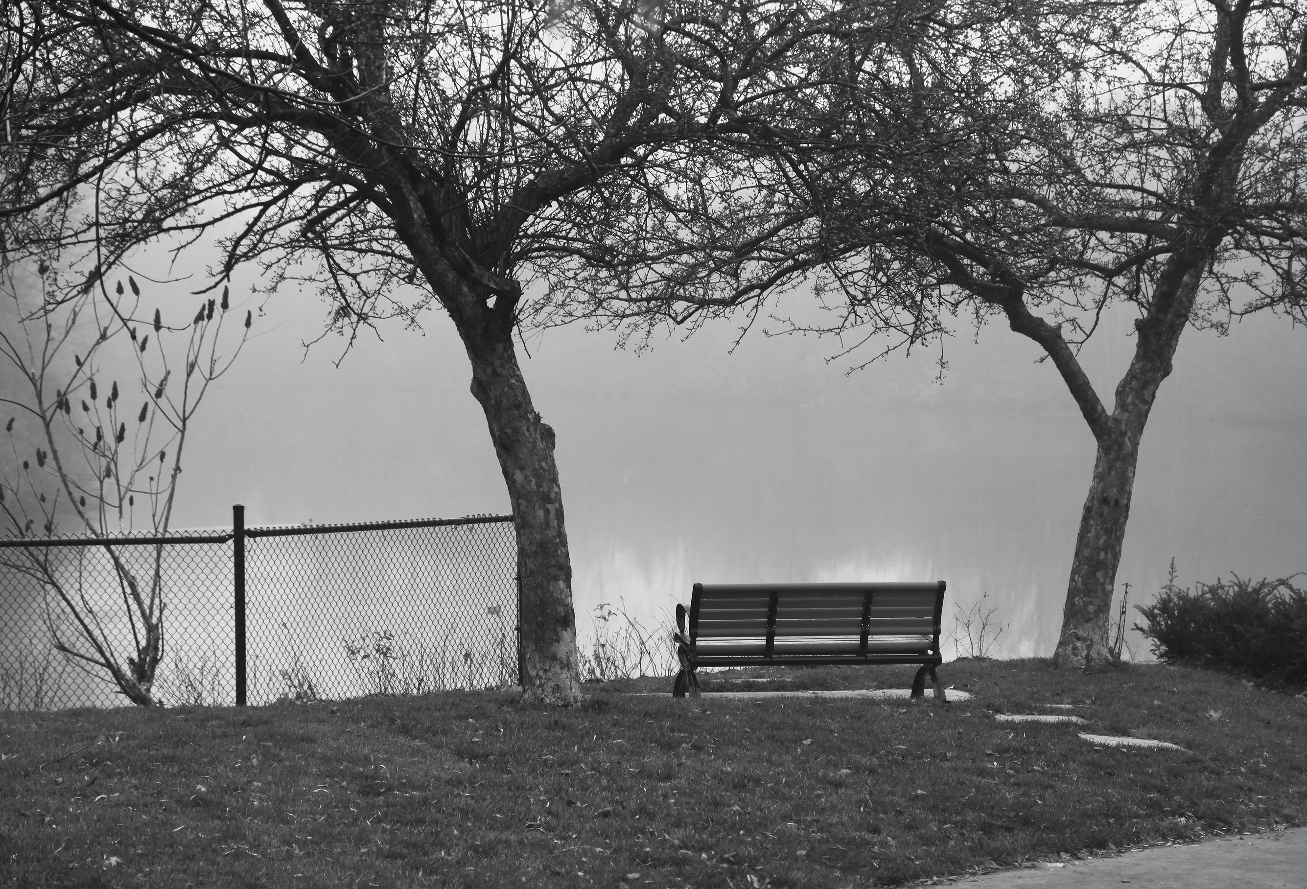 foggy day bench