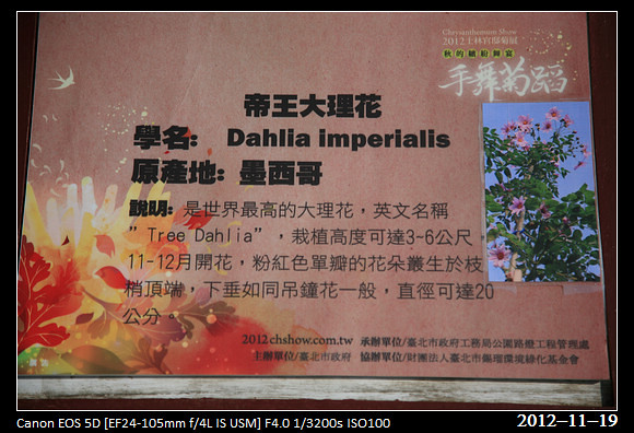 20121119_Flower2