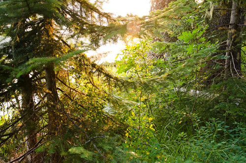 camping sunlight green nature oregon sunrise log unitedstates odelllake