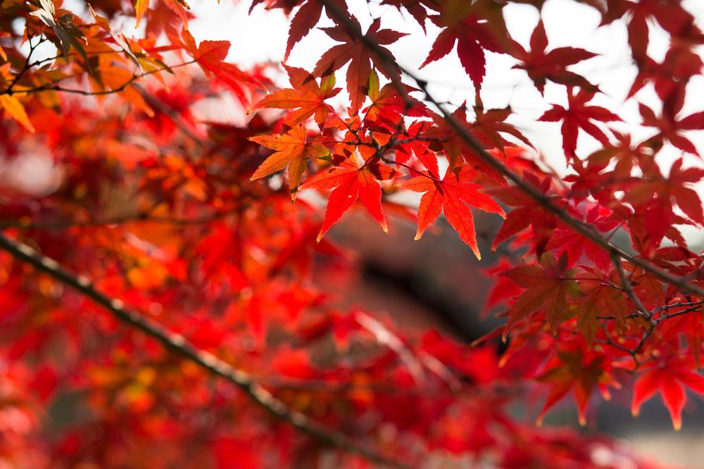 Kyoto-shi, Kyoto Prefecture, Japan, 0.004 sec (1/250), f/4.5, 85 mm, EF85mm f/1.8 USM