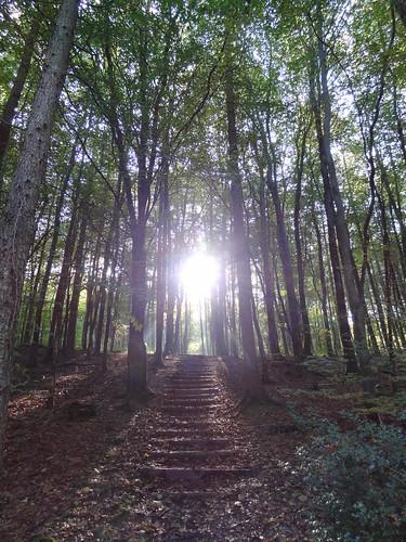 Autumn light in Minwear Woods: Sunlit  staircase
