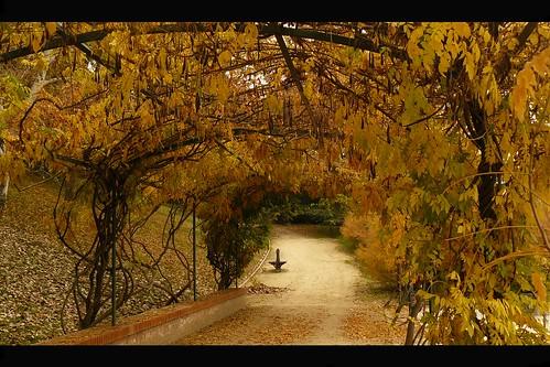 madrid autumn trees españa nature leaves automne leaf spain path herbst natur natura autumnleaves otoño 秋 autunno spanien pergola ocher スペイン ocra ocker laubengang