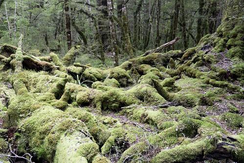 forest_walk_6