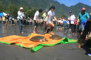 海龜野放。(圖片來源:程一駿研究團隊)