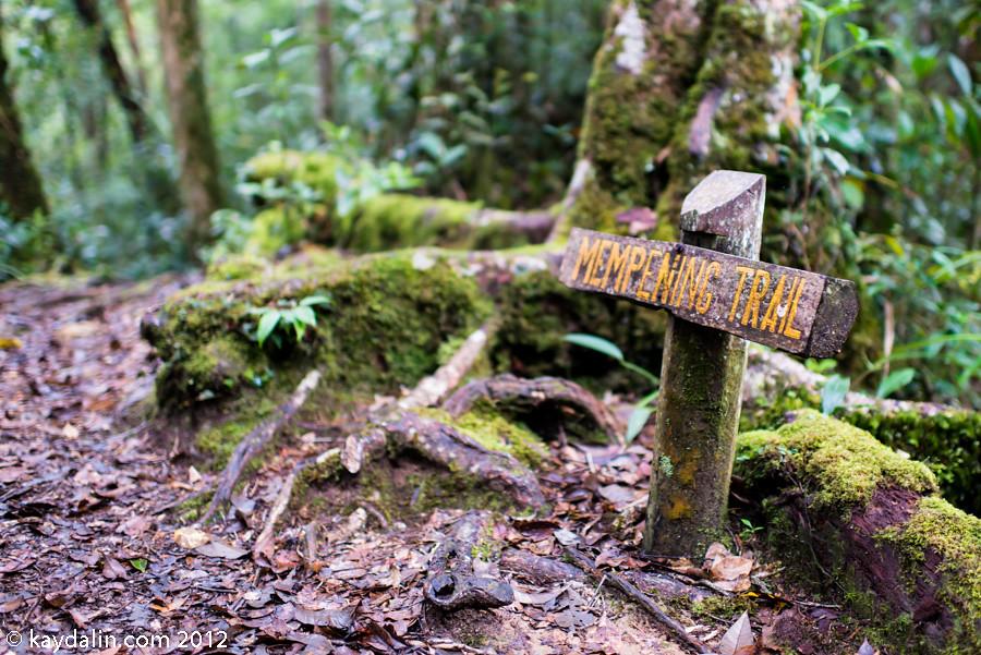 kinabalu park rain forest