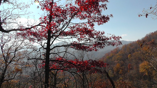 S1130002_Red_Tree_at_Overlook_on_Newfound_Gap_Road