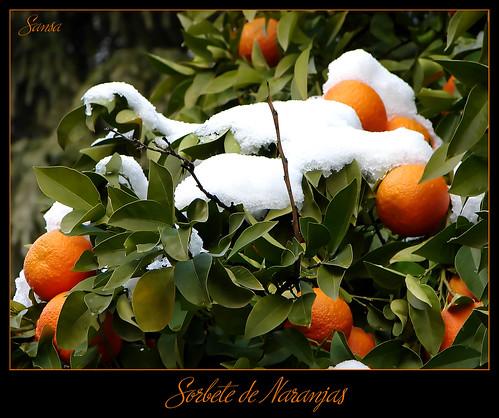 Sorbete de naranjas by Sansa - Factor Humano