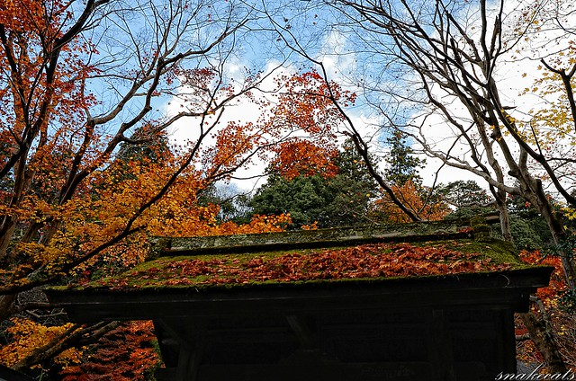 「落葉」 室生寺 - 奈良