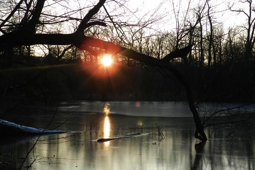 sunset sun tree czech sonne baum teplice teplitz