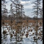 Horseshoe+Lake+State+Fish+and+Wildlife+Area