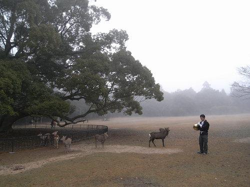 鹿寄せ@奈良公園(飛火野)-02