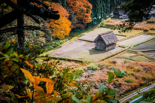 world autumn light shadow red house mountain tree heritage fall field yellow japan landscape scenery village view rice top unesco shade frame lonely leafs gifu shirakawago foreground hida gassho