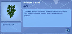 Pleasant Wall Ivy