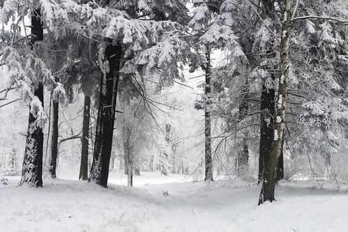 Snow in Goluchow Park
