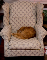 textile, furniture, brown, pet, cat, chair,