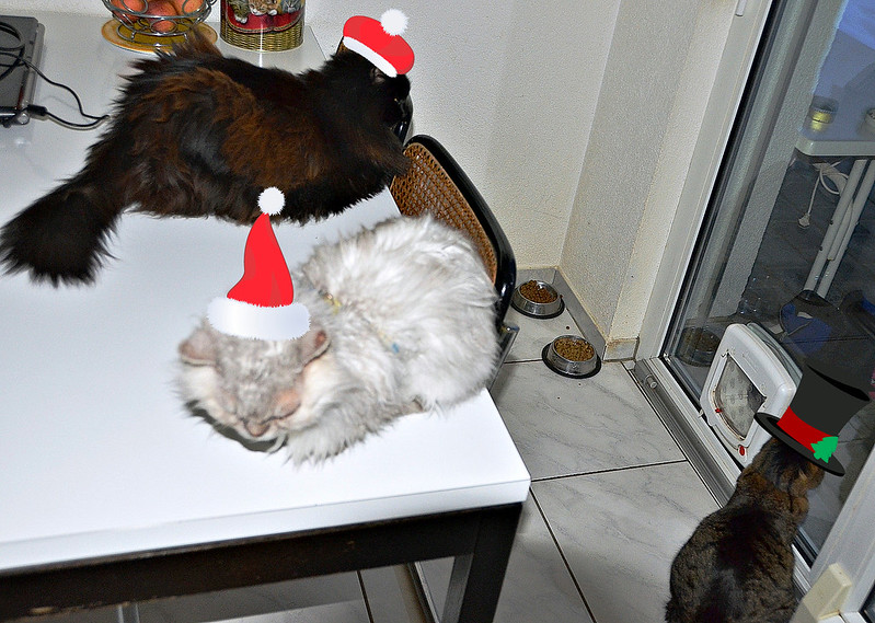 3 cats festive 1