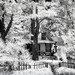 Forest CA_Cottage on the Hill_IR by Barking Dog Photos_Bruce Gregory