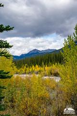 Fall Colours on Whiterabbit Creek