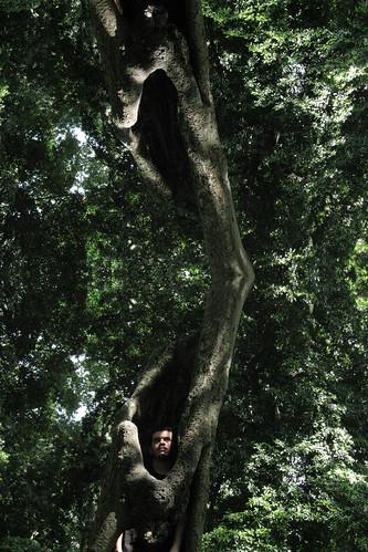 El Árbol, InTronco [Intermitencia en El Espacio] by MAxMÁkina