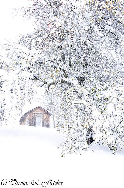 Frankenstorm Snow