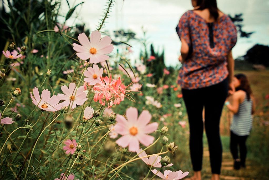 Bukidnon, Dahilayan, Flowers