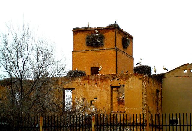 Nidos de Cigüeñas en Alcalá de Henares