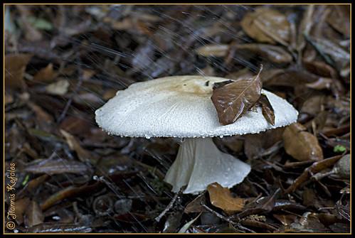 Ikaria 257 by jiannis kefalos, on Flickr