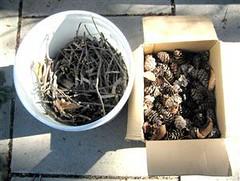 biomass (1)