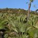 Palms - Mas palmas; Región Mixteca, Oaxaca, Mexico por Lon&Queta