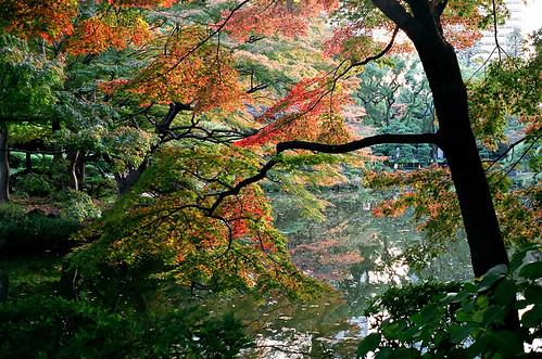 [フリー画像素材] 自然風景, 森林, 河川・湖, 紅葉・黄葉, 風景 - 日本 ID:201211292000