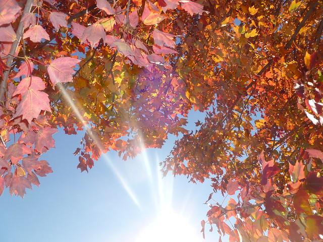 Autumn Flash