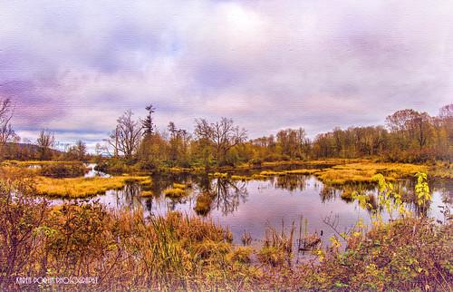 trees texture reflections fisheye wetland topaz nisquallyriver nisquallynationalwildliferefuge rubyblossom