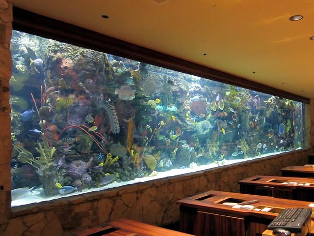 Mirage aquarium flickr photo sharing for Tropical fish las vegas