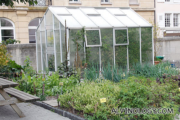 There is a small garden in front of the Alimentarium with real crops