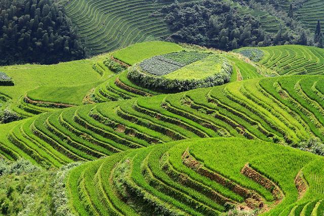 The Longji rice terraces in Longsheng County, China.