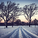 Snow in the park by steve.mcgrane