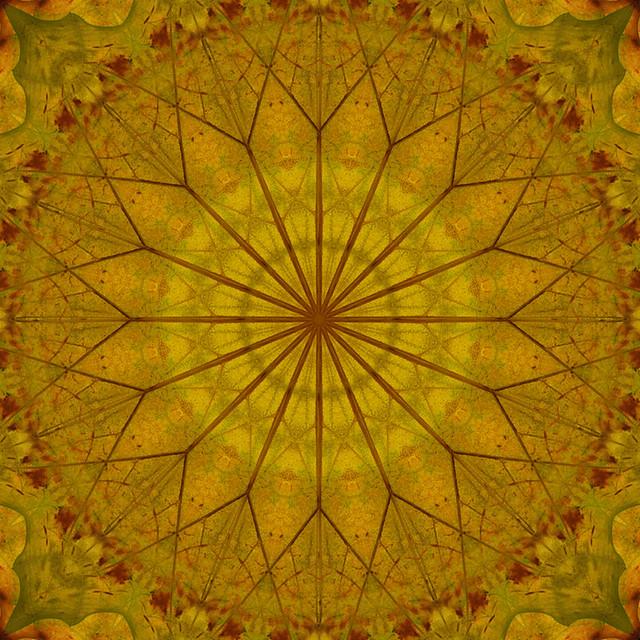 Simetría de hojas 2